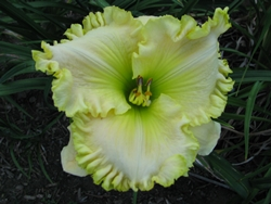 Join the Metropolitan Columbus Daylily Society
