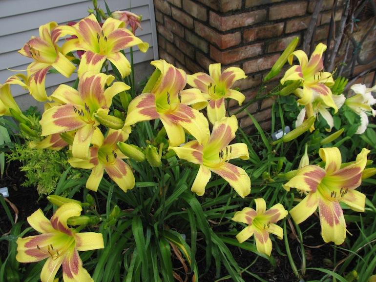lily garden columbus ohio