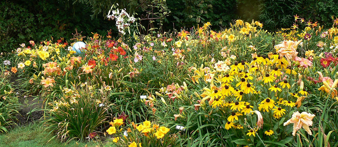 American Hemerocallis Society (AHS) Display Gardens
